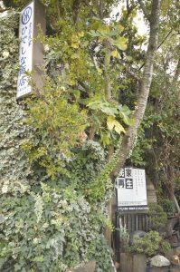 東京探訪その2 ジャングル編